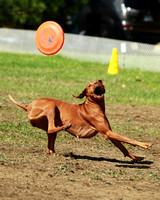 Guides Canins Frisbee 2014